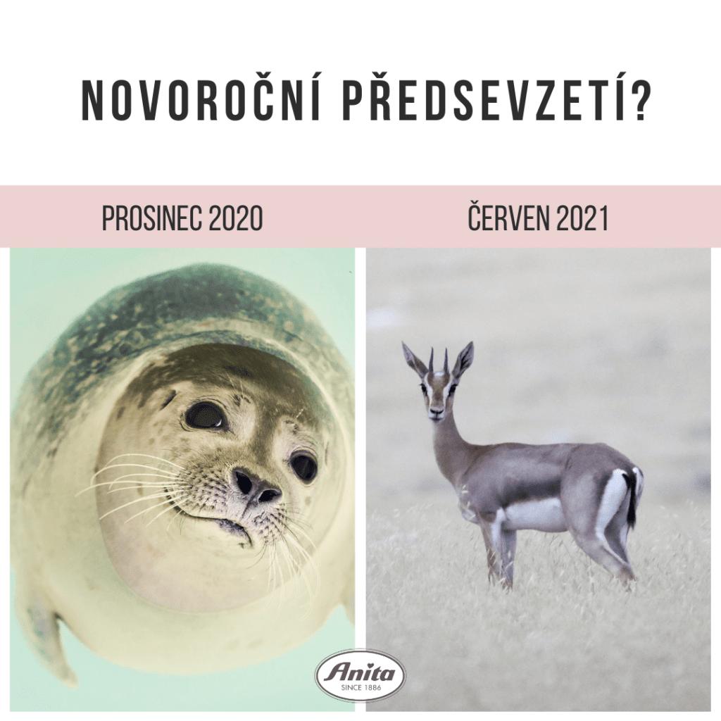 content creator Brno jana r kuzelova 4